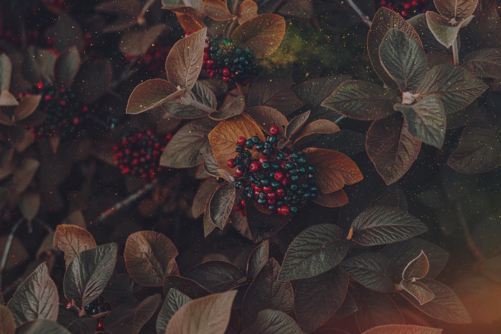 Main 3 – Living Gracefully